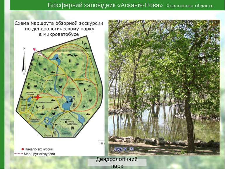 Біосферний заповідник «Асканія-Нова», Херсонська область Дендрологічний парк