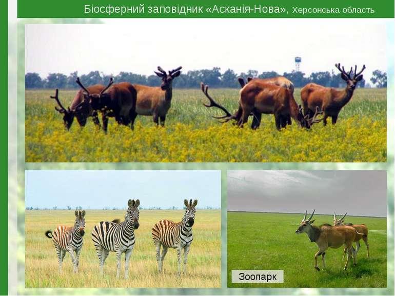 Біосферний заповідник «Асканія-Нова», Херсонська область Зоопарк
