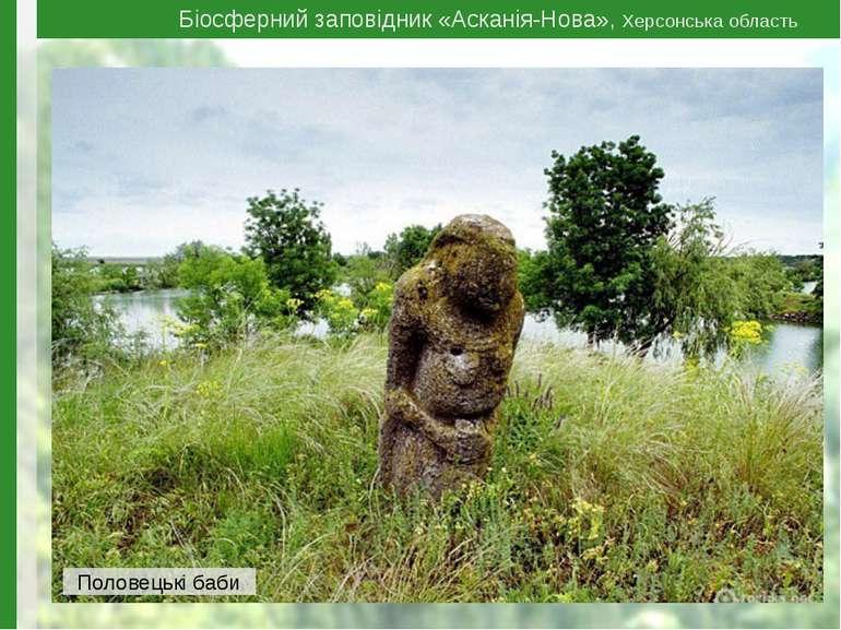 Біосферний заповідник «Асканія-Нова», Херсонська область Половецькі баби