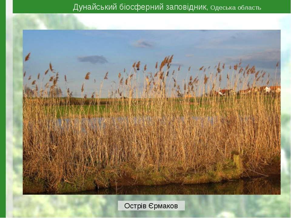 Дунайський біосферний заповідник, Одеська область Острів Єрмаков