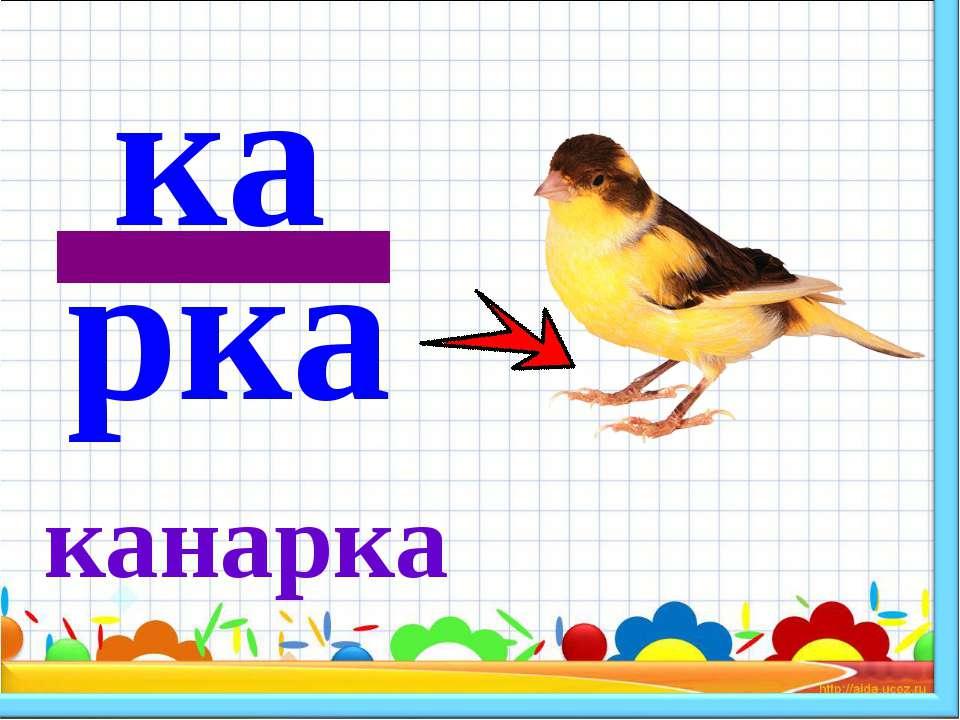 канарка