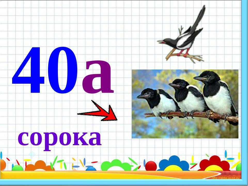 сорока 40а