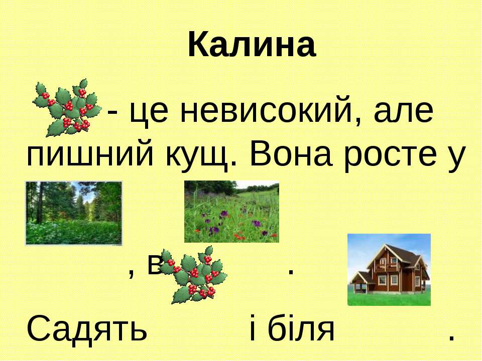 Калина - це невисокий, але пишний кущ. Вона росте у , в . Садять і біля .