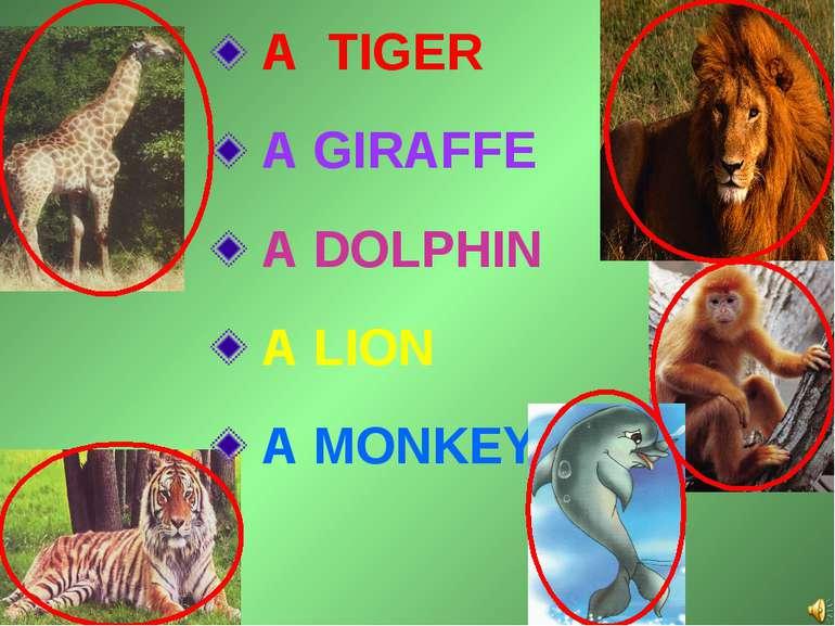 A TIGER A GIRAFFE A DOLPHIN A LION A MONKEY