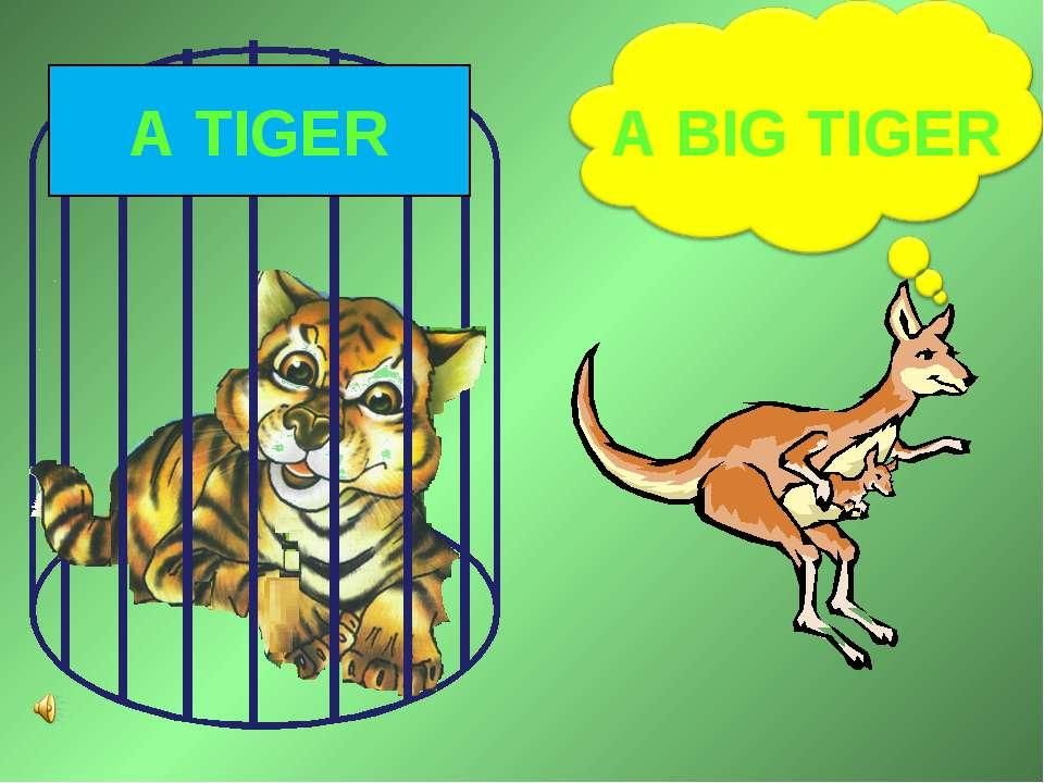 A BIG TIGER A TIGER