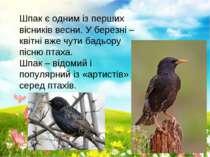 Шпак є одним із перших вісників весни. У березні – квітні вже чути бадьору пі...