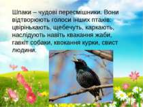 Шпаки – чудові пересмішники. Вони відтворюють голоси інших птахів: цвірінькаю...