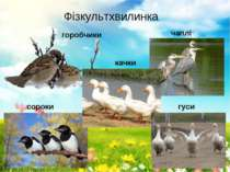 Фізкультхвилинка горобчики чаплі сороки качки гуси