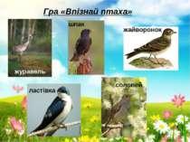 Гра «Впізнай птаха» журавель шпак жайворонок ластівка соловей