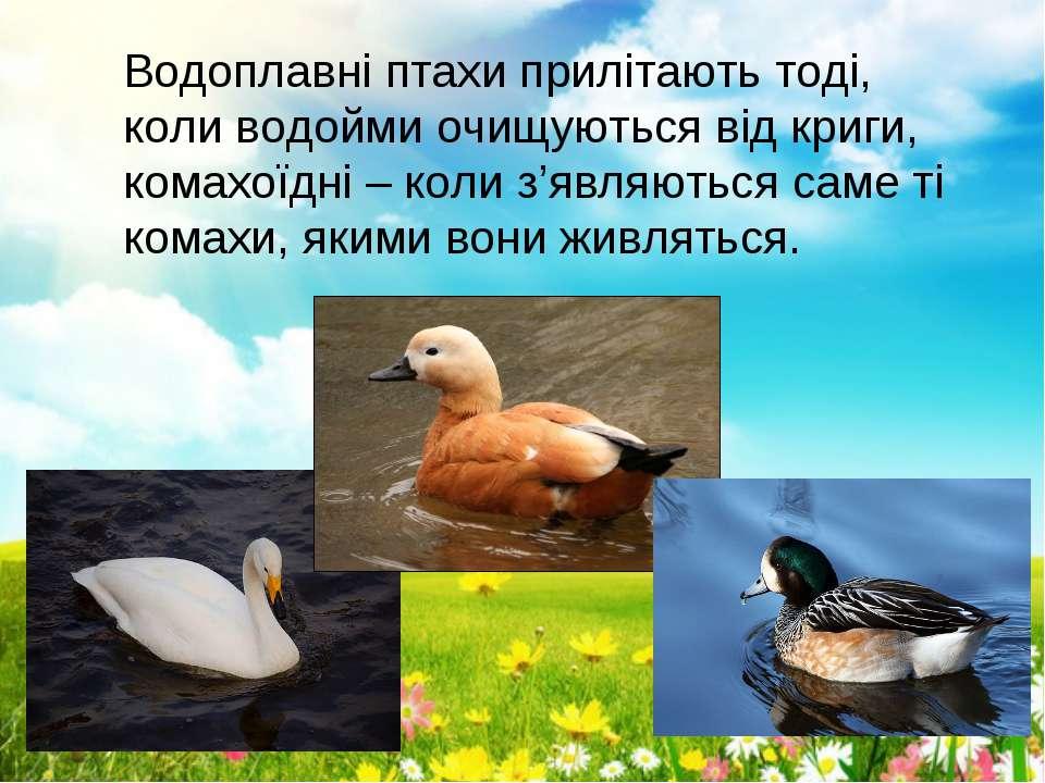 Водоплавні птахи прилітають тоді, коли водойми очищуються від криги, комахоїд...