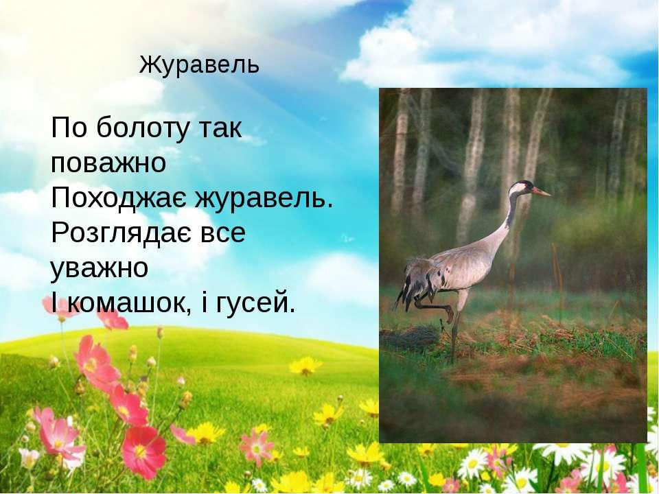 По болоту так поважно Походжає журавель. Розглядає все уважно І комашок, і гу...
