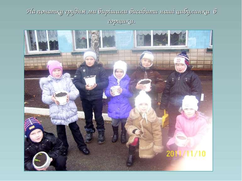 На початку грудня ми вирішили висадити наші цибулинки в горщики.