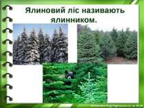 Ялиновий ліс називають ялинником. Білоножко Н.Д.Черкаська сп. ш. №18