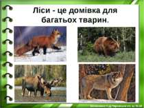 Ліси - це домівка для багатьох тварин. Білоножко Н.Д.Черкаська сп. ш. №18