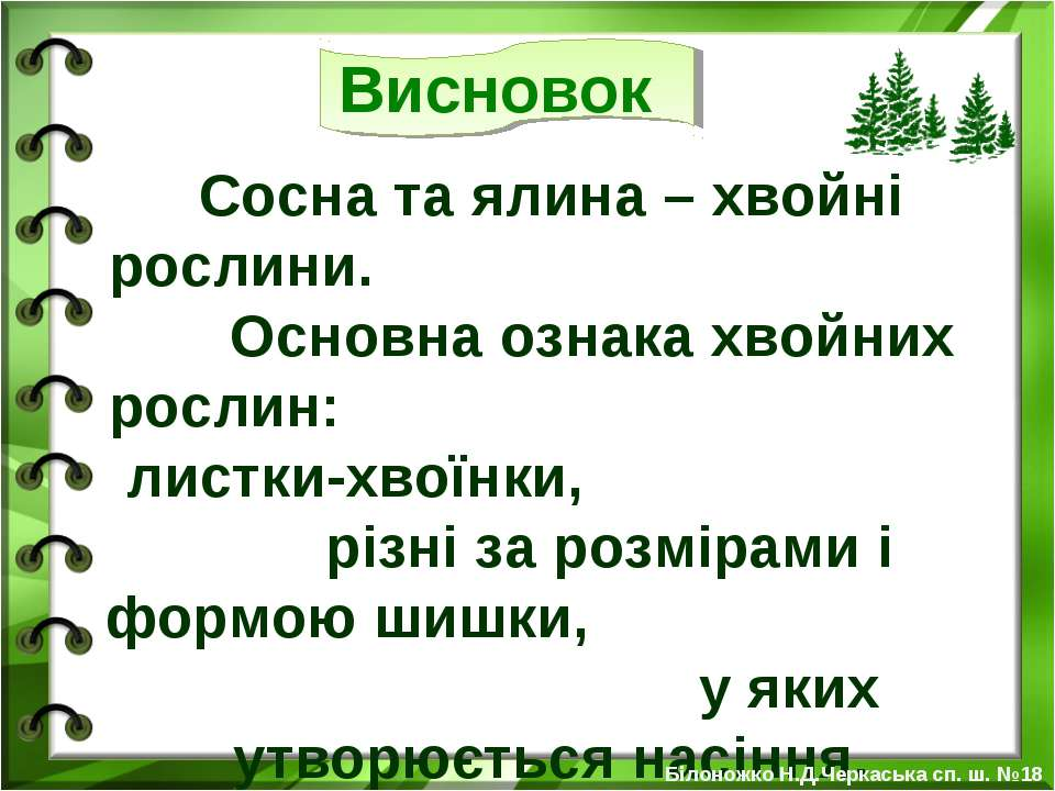 Сосна та ялина – хвойні рослини. Основна ознака хвойних рослин: листки-хвоїнк...