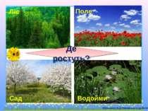 Ліс Поле Сад Водойми Де ростуть?