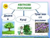 КВІТКОВІ РОСЛИНИ Дерева Кущі Трав`янисті рослини