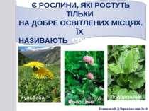 Конюшина Кульбаба Подорожник Білоножко Н.Д.Черкаська сп.ш.№18