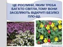 Резуха Душенея Білоножко Н.Д.Черкаська сп.ш.№18