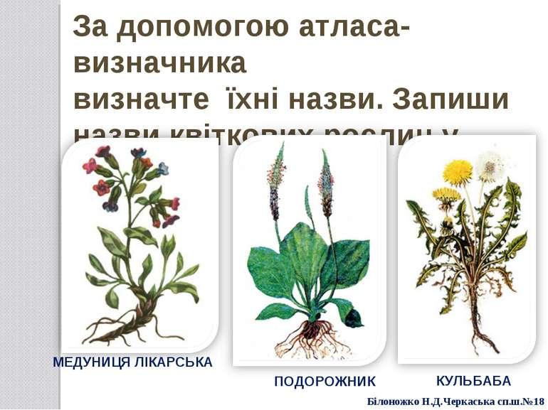 За допомогою атласа-визначника визначте їхні назви. Запиши назви квіткових ро...