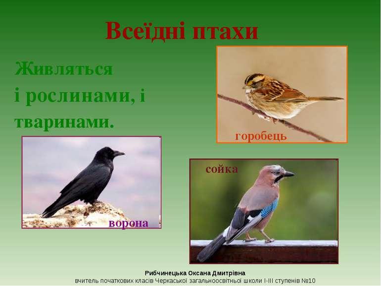 Всеїдні птахи Живляться і рослинами, і тваринами. горобець ворона Рибчинецька...