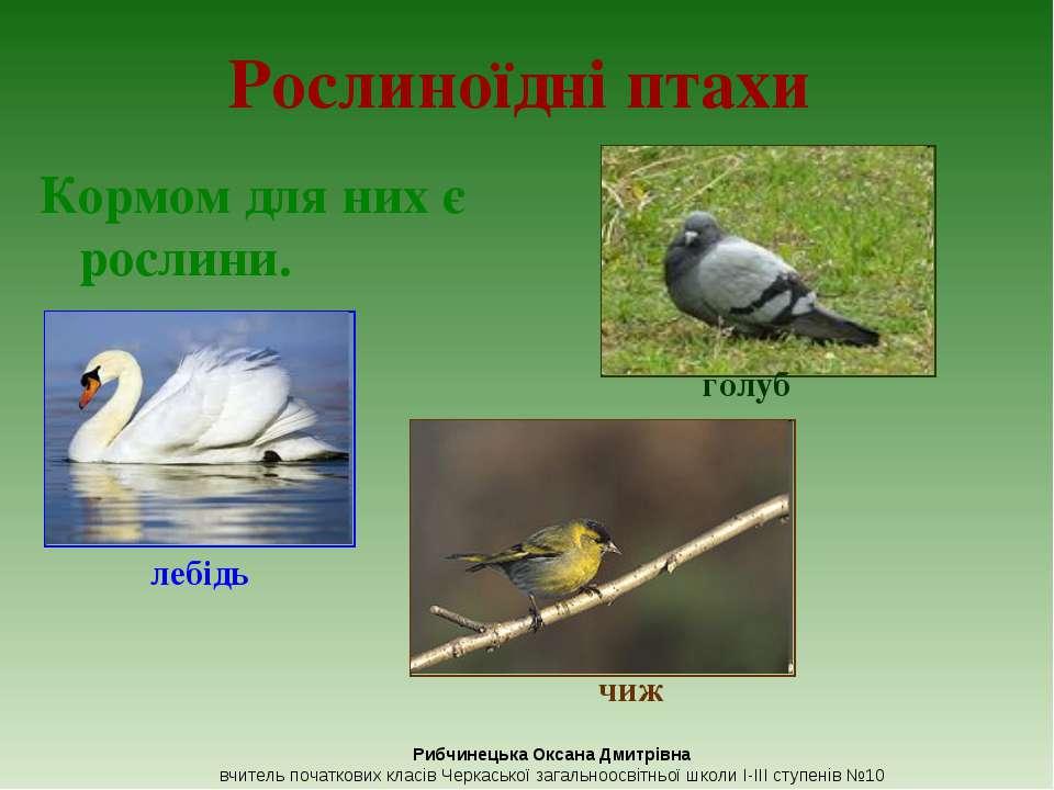 Рослиноїдні птахи Кормом для них є рослини. голуб лебідь чиж Рибчинецька Окса...