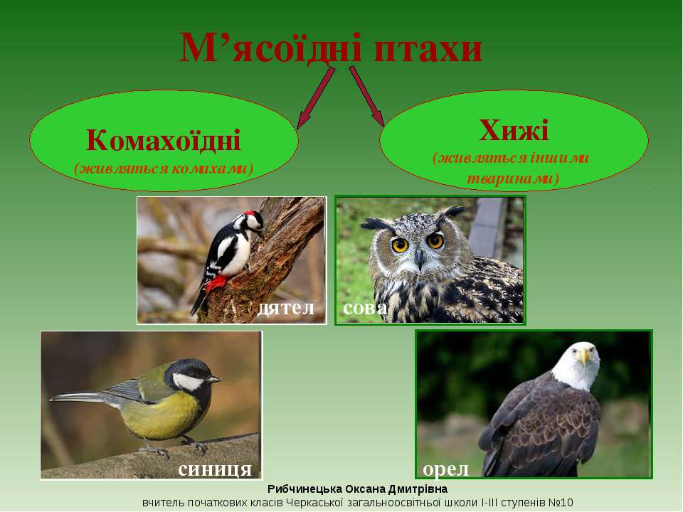 М'ясоїдні птахи сова орел Рибчинецька Оксана Дмитрівна вчитель початкових кла...
