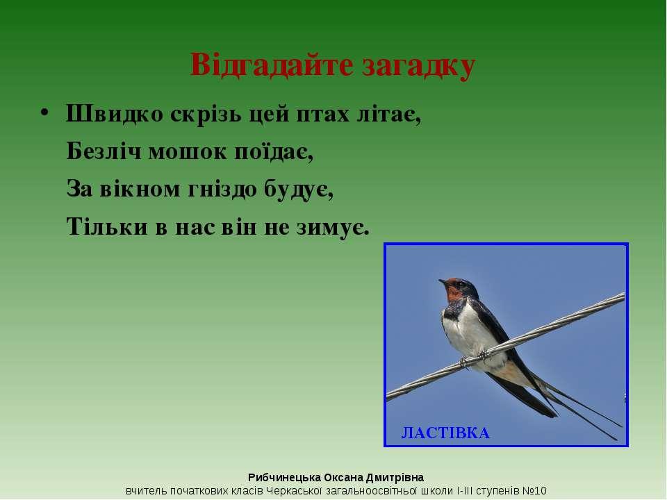 Відгадайте загадку Швидко скрізь цей птах літає, Безліч мошок поїдає, За вікн...