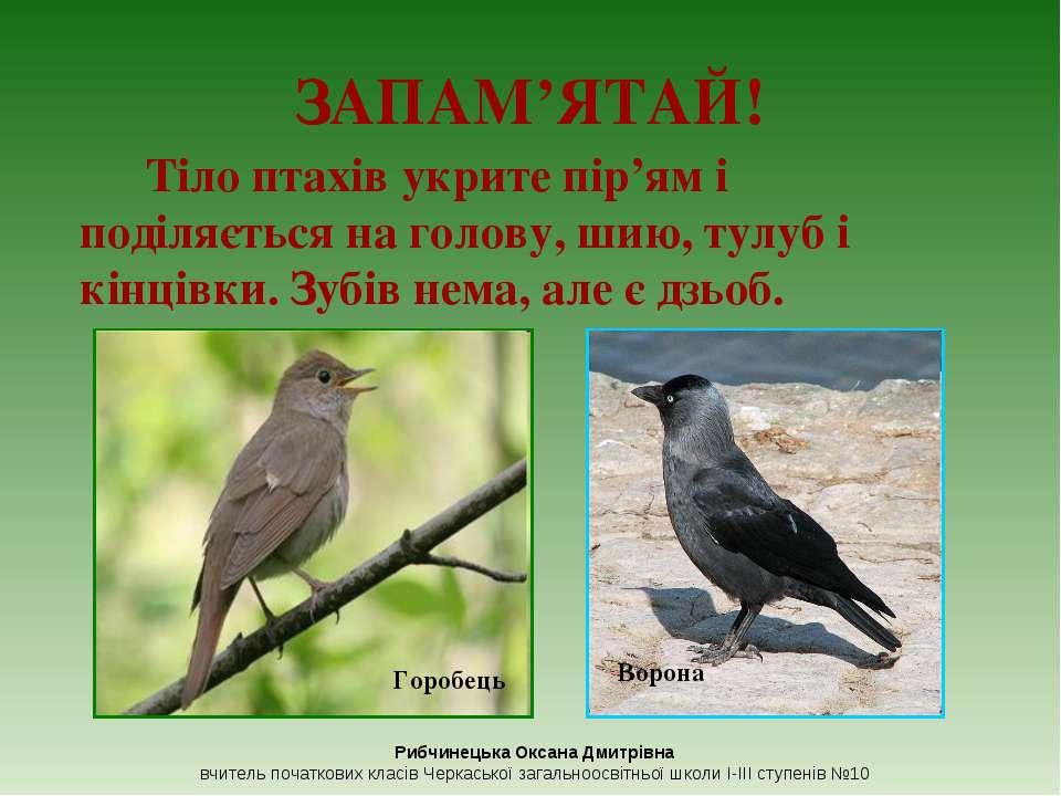 ЗАПАМ'ЯТАЙ! Тіло птахів укрите пір'ям і поділяється на голову, шию, тулуб і к...