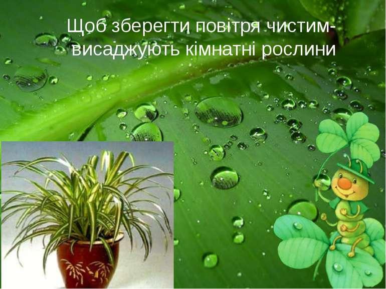 Щоб зберегти повітря чистим- висаджують кімнатні рослини