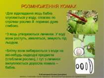 Рибчинецька Оксана Дмитрівна вчитель початкових класів Черкаської загальноосв...