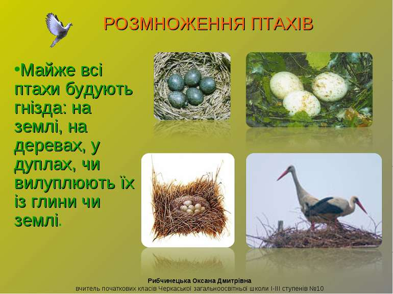 Майже всі птахи будують гнізда: на землі, на деревах, у дуплах, чи вилуплюють...