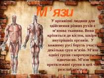 М'язи У організмі людини для здійснення різних рухів є м'язова тканина. Вона ...