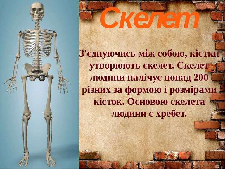 Скелет З'єднуючись між собою, кістки утворюють скелет. Скелет людини налічує ...