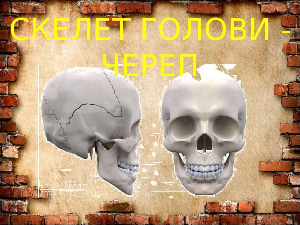 СКЕЛЕТ ГОЛОВИ - ЧЕРЕП