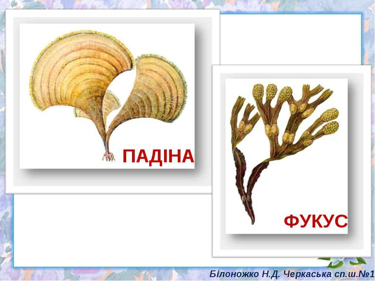 ПАДІНА ФУКУС Білоножко Н.Д. Черкаська сп.ш.№18