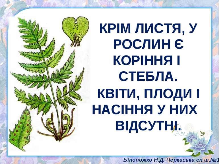 КРІМ ЛИСТЯ, У РОСЛИН Є КОРІННЯ І СТЕБЛА. КВІТИ, ПЛОДИ І НАСІННЯ У НИХ ВІДСУТН...