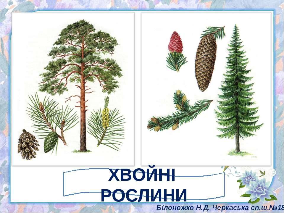 ХВОЙНІ РОСЛИНИ Білоножко Н.Д. Черкаська сп.ш.№18