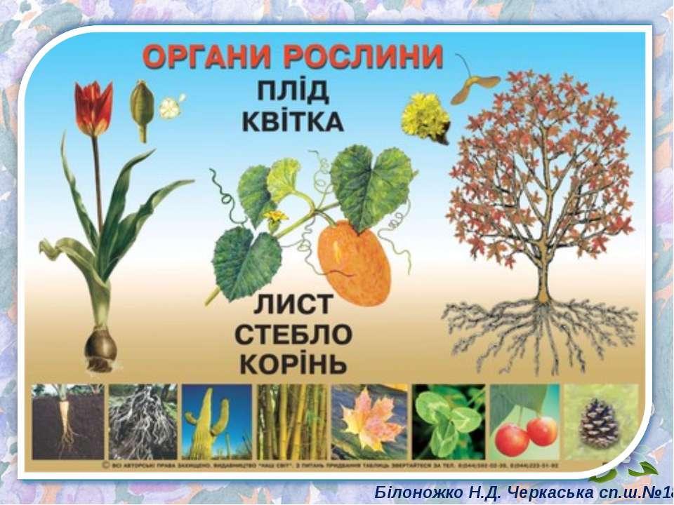 Білоножко Н.Д. Черкаська сп.ш.№18