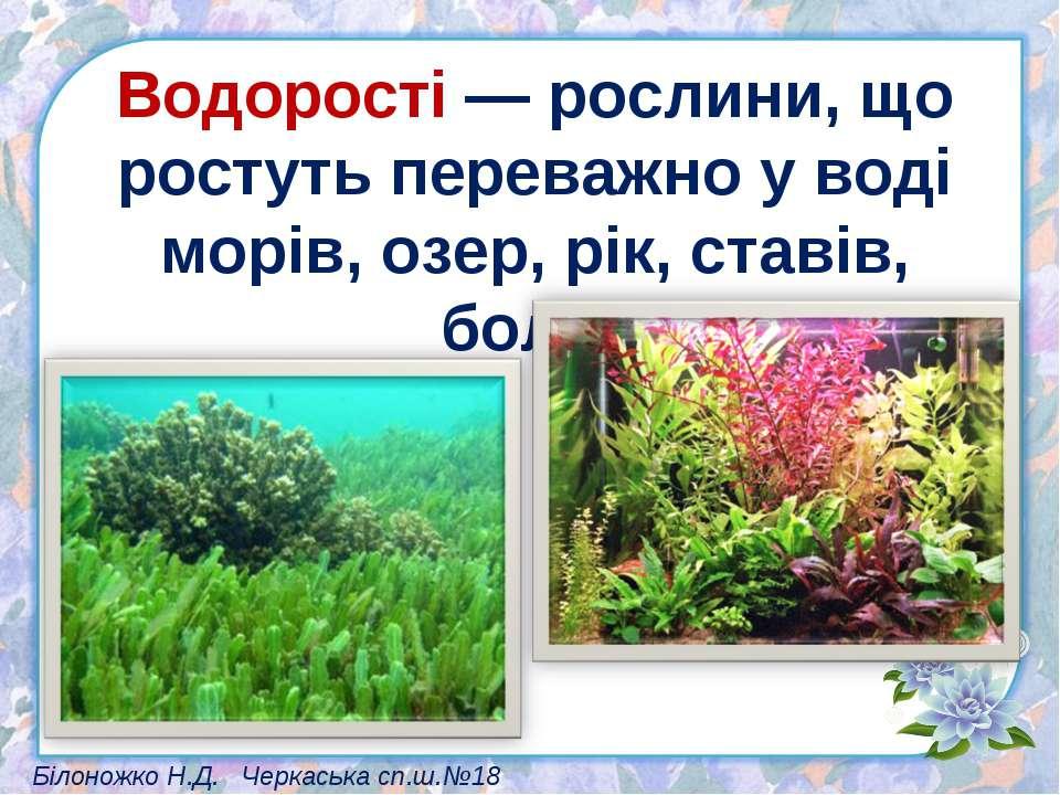 Водорості — рослини, що ростуть переважно у воді морів, озер, рік, ставів, бо...