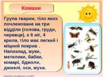 Комахи Група тварин, тіло яких почленоване на три відділи (голова, груди, чер...