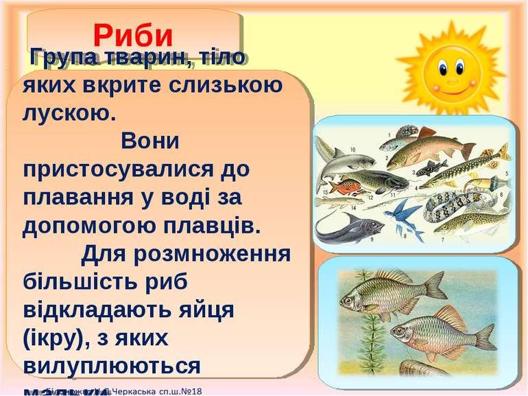 Риби Група тварин, тіло яких вкрите слизькою лускою. Вони пристосувалися до п...