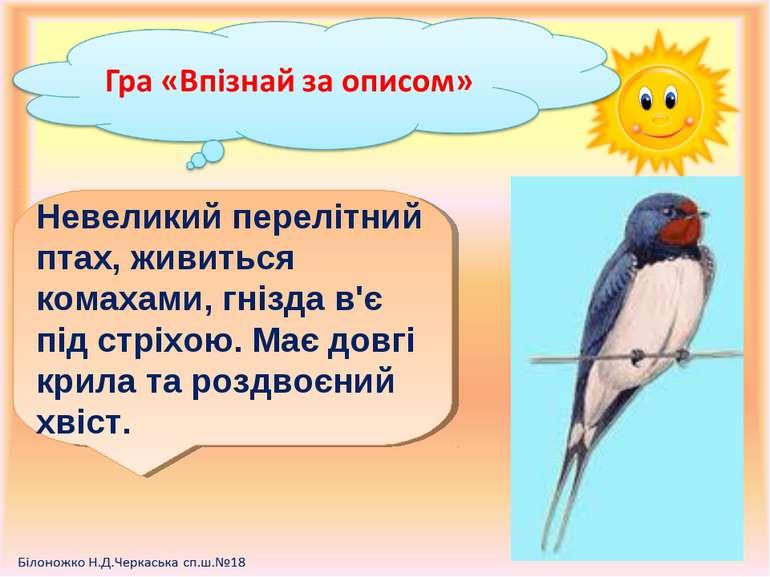 Невеликий перелітний птах, живиться комахами, гнізда в'є під стріхою. Має дов...