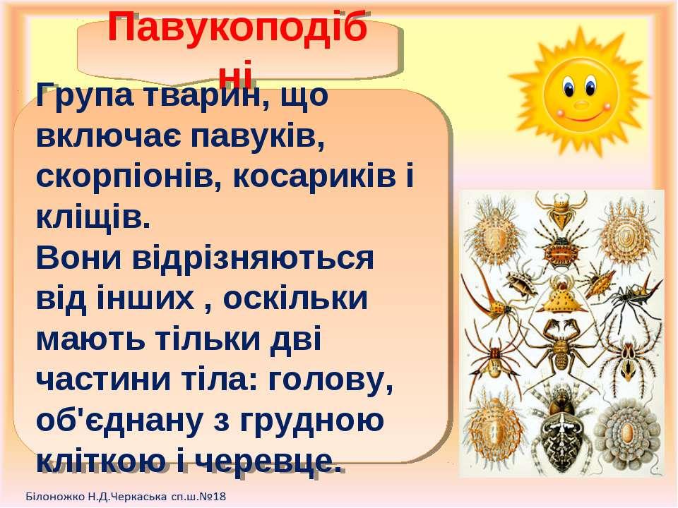 Павукоподібні Група тварин, що включає павуків, скорпіонів, косариків і кліщі...
