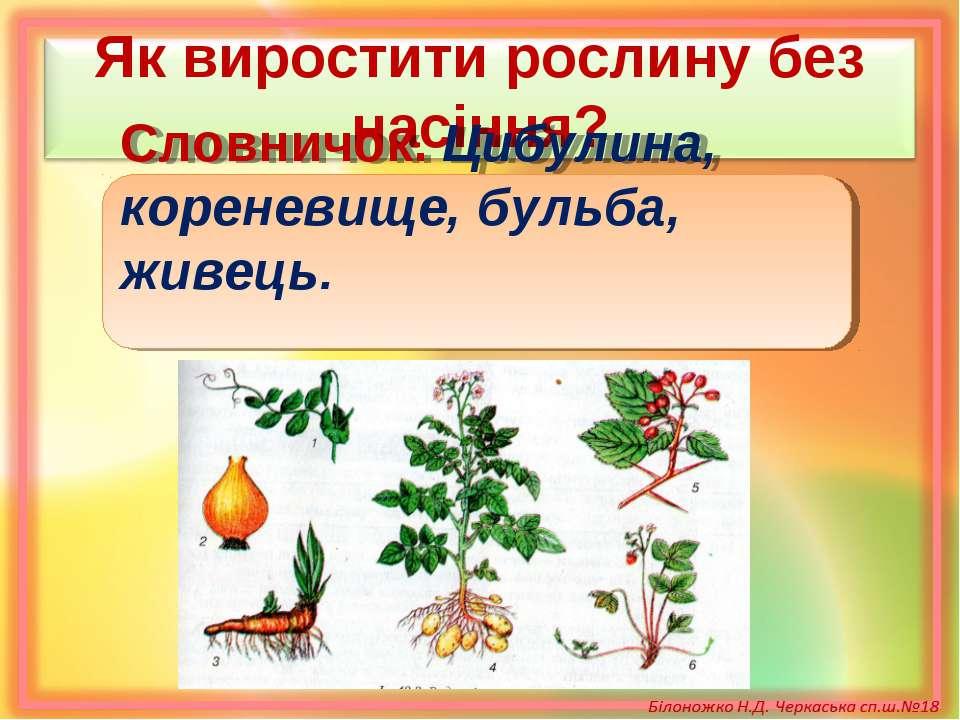 Як виростити рослину без насіння? Словничок. Цибулина, кореневище, бульба, жи...