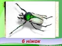 6 ніжок . Білоножко Н.Д. Черкаська сп.ш.№18.