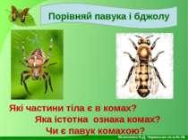 Порівняй павука і бджолу Які частини тіла є в комах? Яка істотна ознака комах...