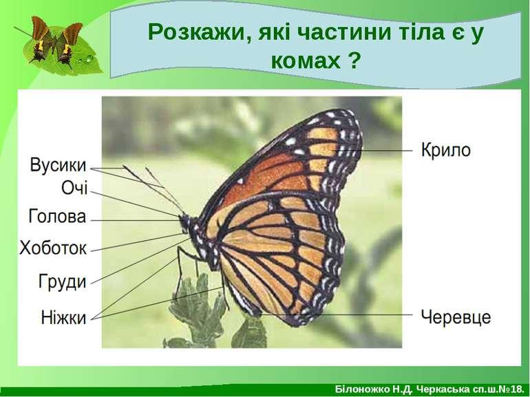 Розкажи, які частини тіла є у комах ? Білоножко Н.Д. Черкаська сп.ш.№18.