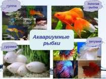 Рыбы делятся на три группы: - Речные - Морские - Аквариумные