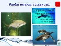 Рыбы появляются из икры.